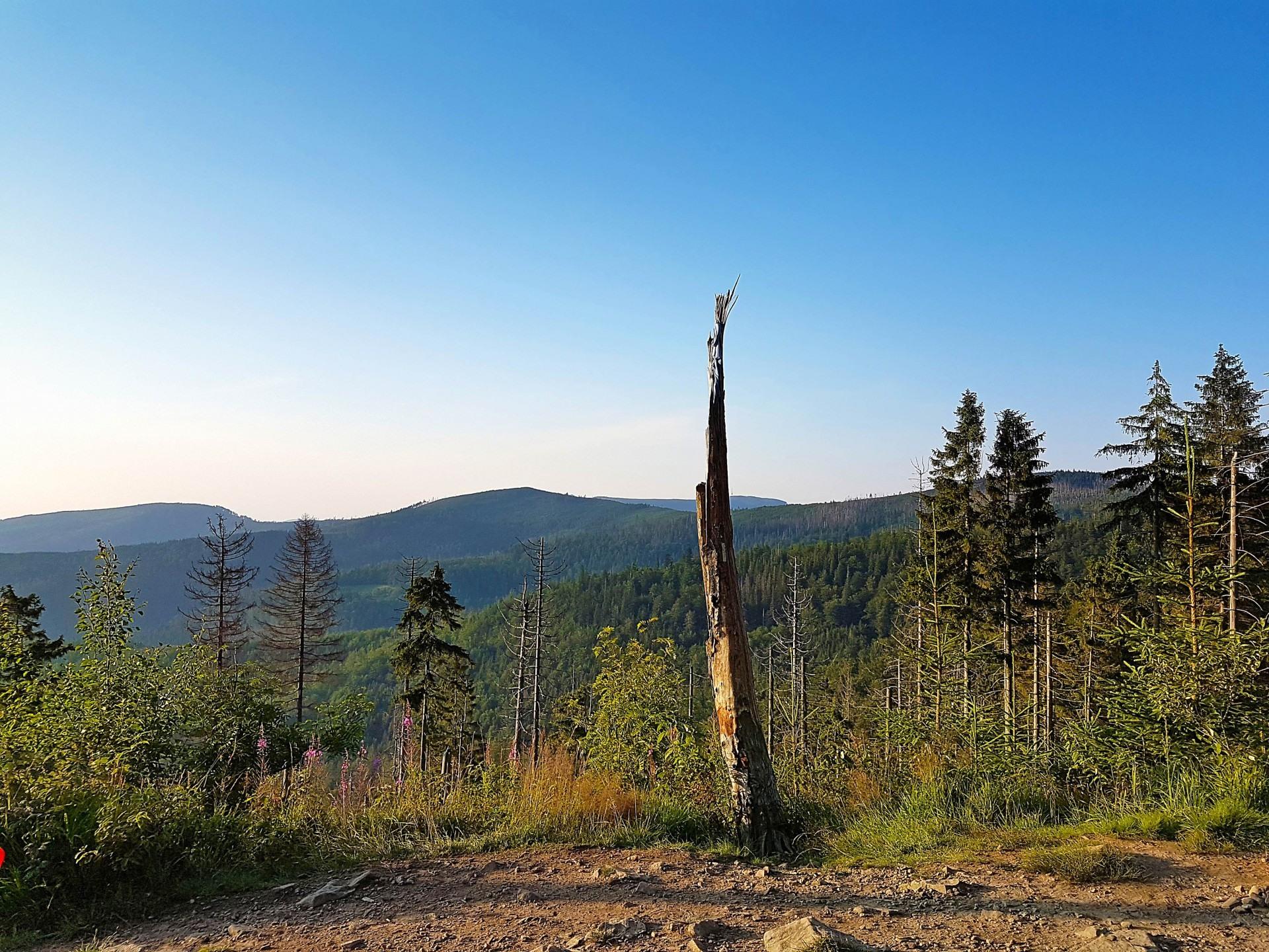Barania Góra, widok ze szlaku, w pobliżu domków nad Jeziorem Żywieckim, Rozmaryn